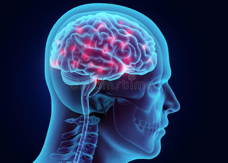 3D actieve zenuwstelsel van illustratiehersenen vector illustratie