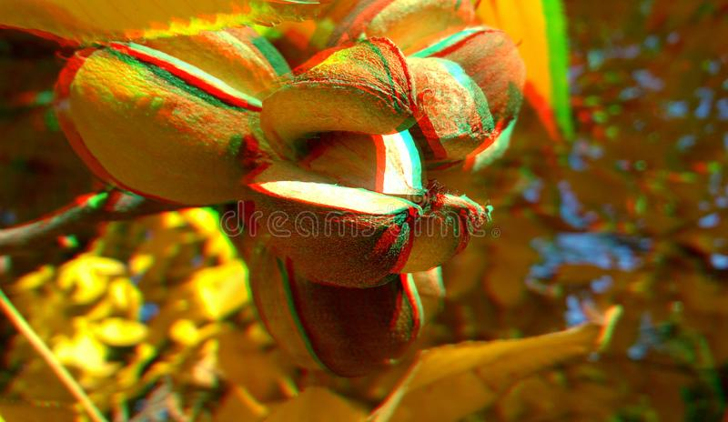 3D anaglyph hickory nuts. Nice autumn background. Yellow hickory leaves. 3D anaglyph, hickory nuts. Autumn background. Traditional england food. Traditional royalty free stock images