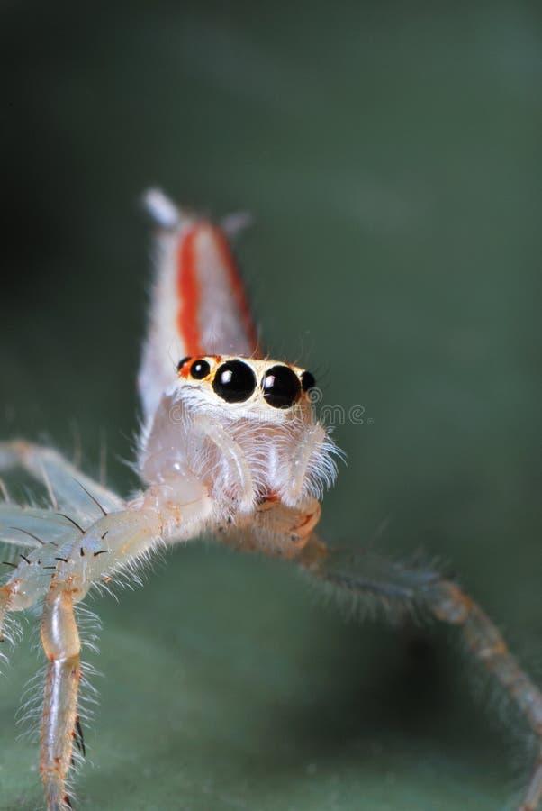 D'araignée étrange image stock