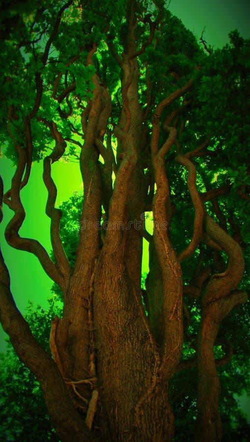 D'arbre étrange photographie stock libre de droits