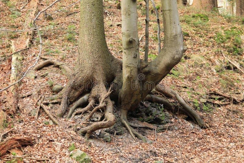D'arbre étrange image stock