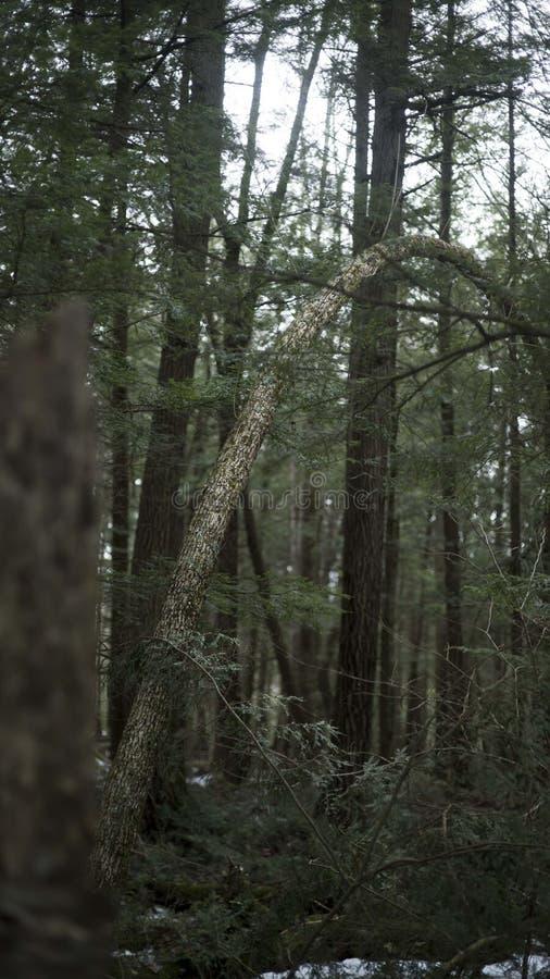 D'arbre étrange images libres de droits