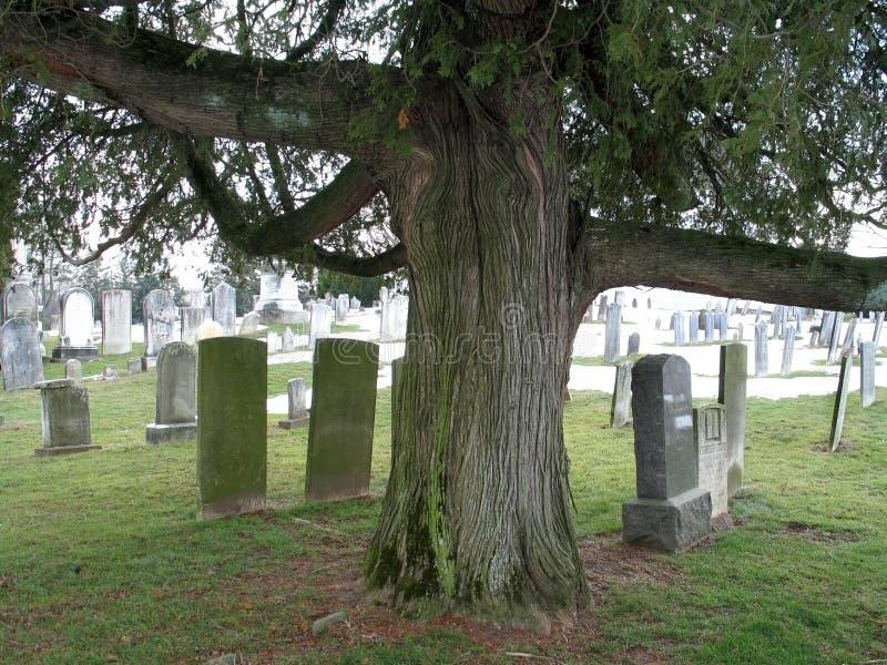 Download D'arbre étrange Et Vieilles Tombes Photo stock - Image du nature, final: 85696