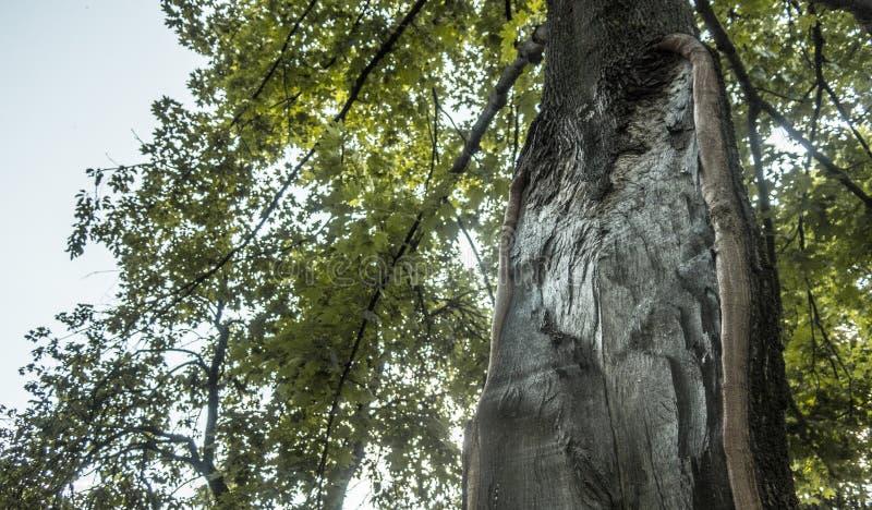 D'arbre étrange peu commun à l'intérieur de lumière du soleil d'été de détails de nature photo libre de droits