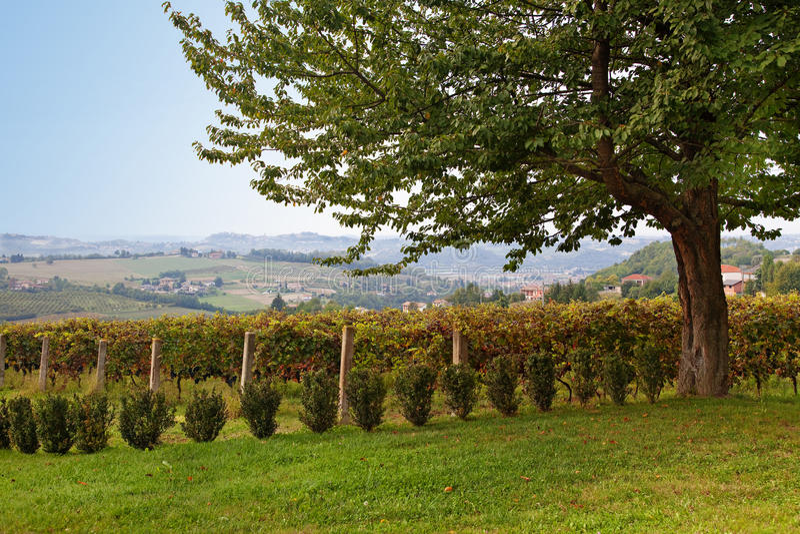D'Asti de Costigliole, Asti, Piedmont, Itália imagem de stock royalty free