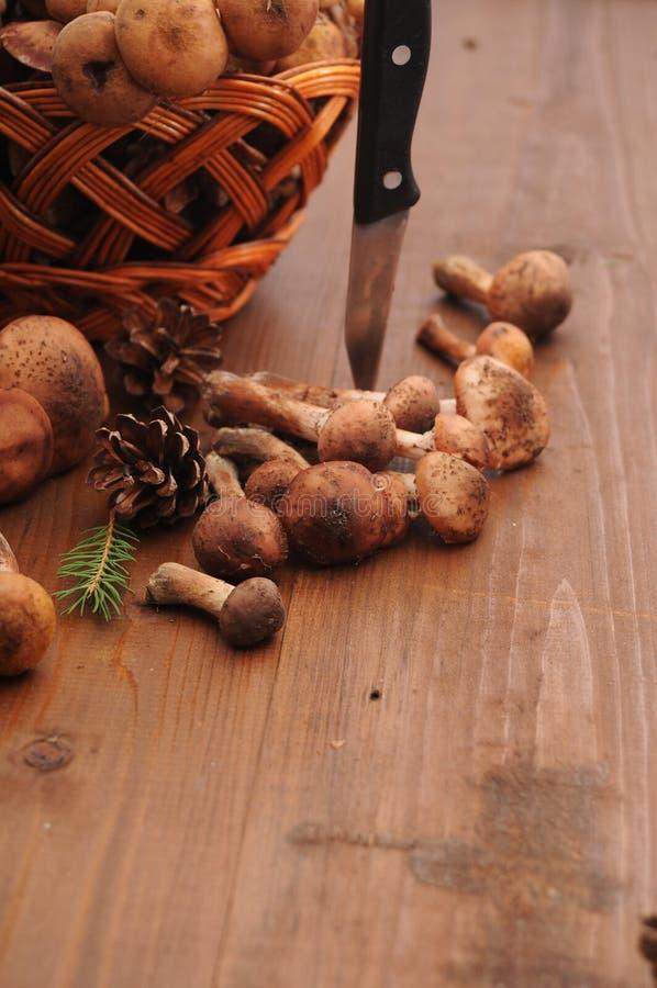 D'automne toujours champignons de la vie sur une table photo stock