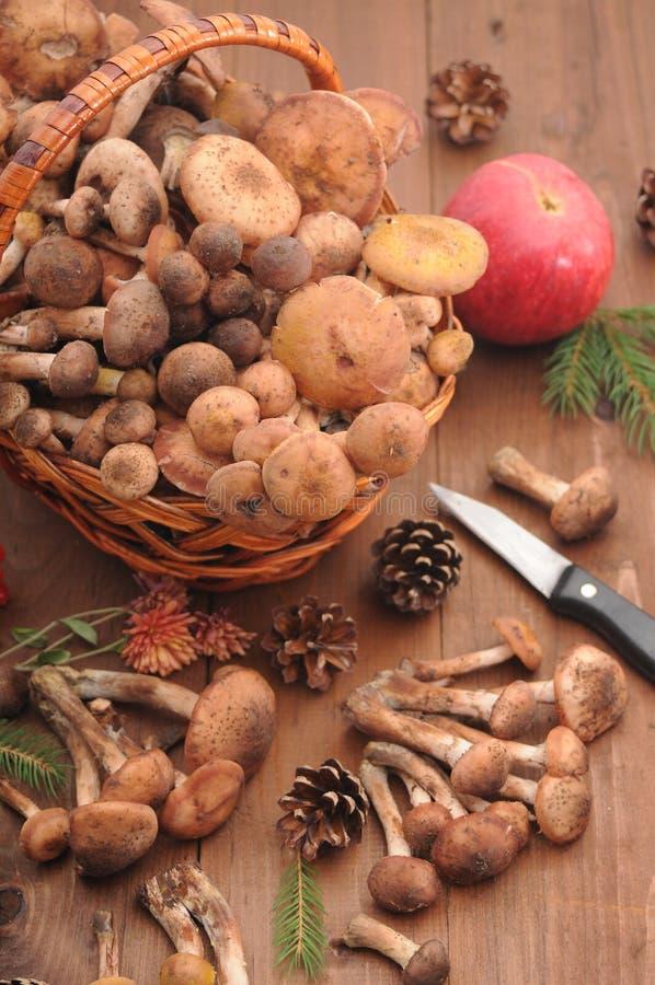 D'automne toujours champignons de la vie sur une table images libres de droits