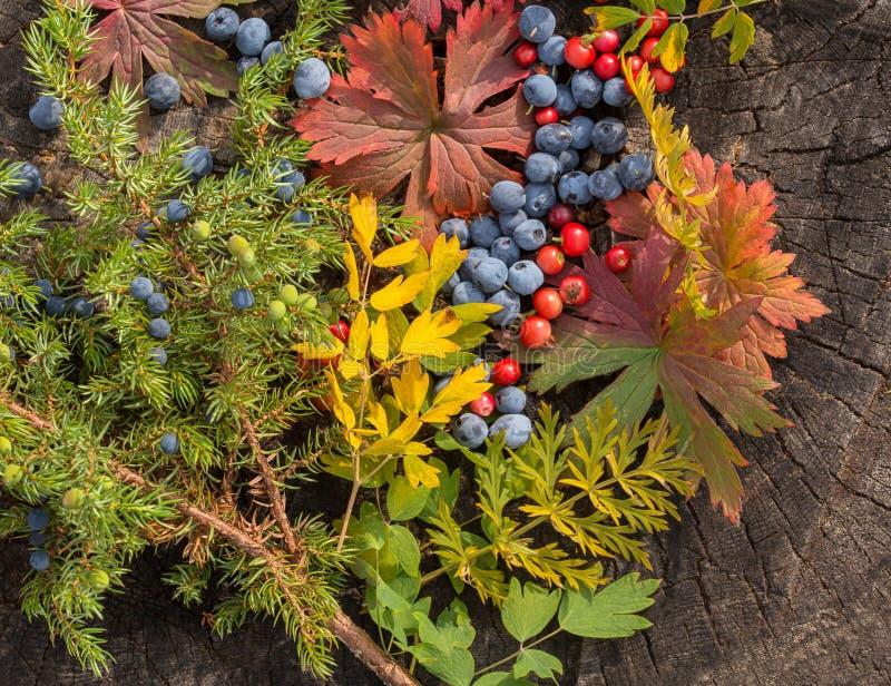 D'automne toujours durée photo libre de droits