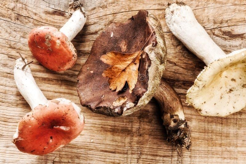 D'automne toujours la vie avec des champignons de forêt images libres de droits
