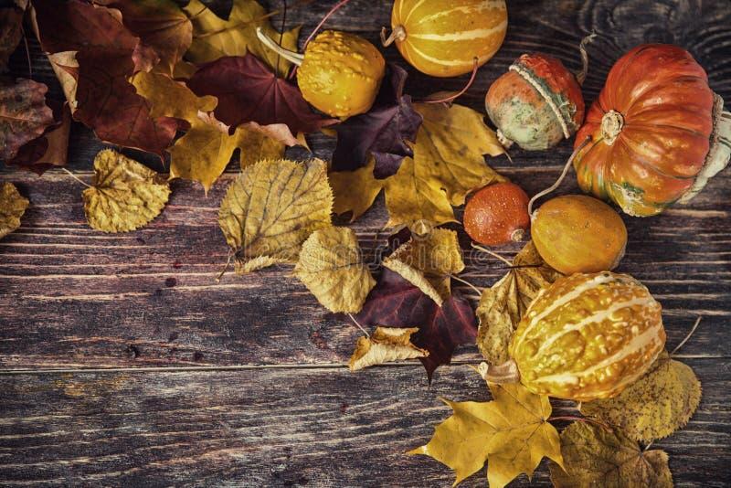 D'automne toujours la vie avec des potirons et des feuilles sur le vieux backgro en bois image libre de droits