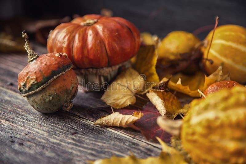 D'automne toujours la vie avec des potirons et des feuilles sur le vieux backgro en bois photos libres de droits