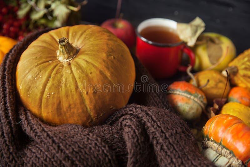 D'automne toujours la vie avec les potirons et la tasse de thé sur le vieux CCB en bois images stock