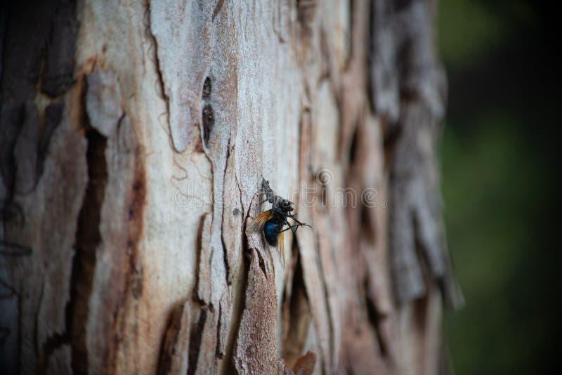 D?d av en fluga arkivbilder