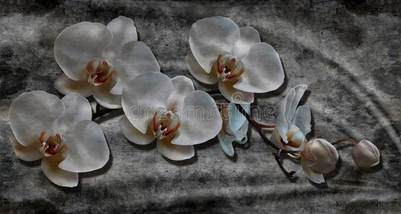 3d background, white orchids on concrete wall mural wallpaper. Fresco effect. royalty free stock photos