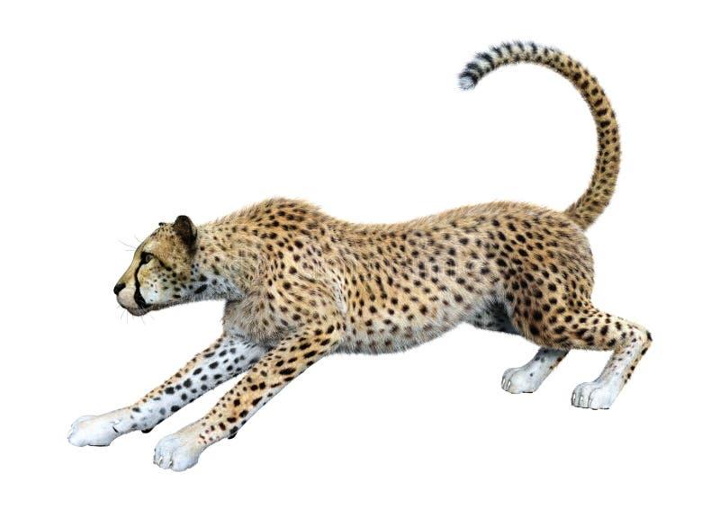 3D Big Cat Cheetah op White teruggeven stock illustratie