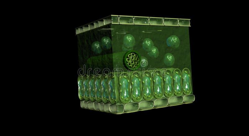 3D bladdwarsdoorsnede stock afbeeldingen