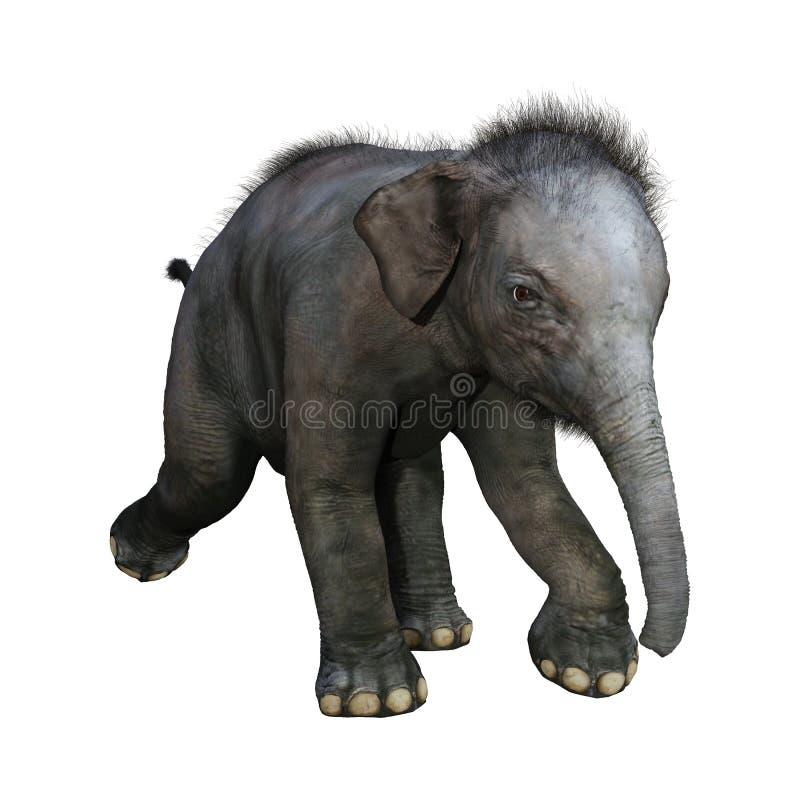 3D che rende il bambino dell'elefante indiano su bianco illustrazione vettoriale
