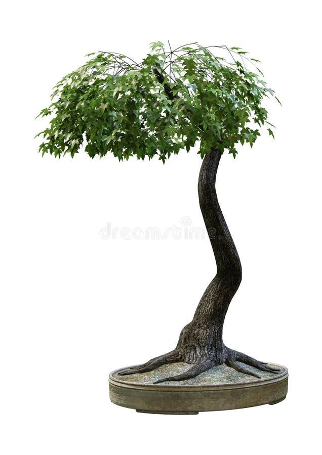 3D che rende l'albero di acero giapponese dei bonsai su bianco illustrazione vettoriale