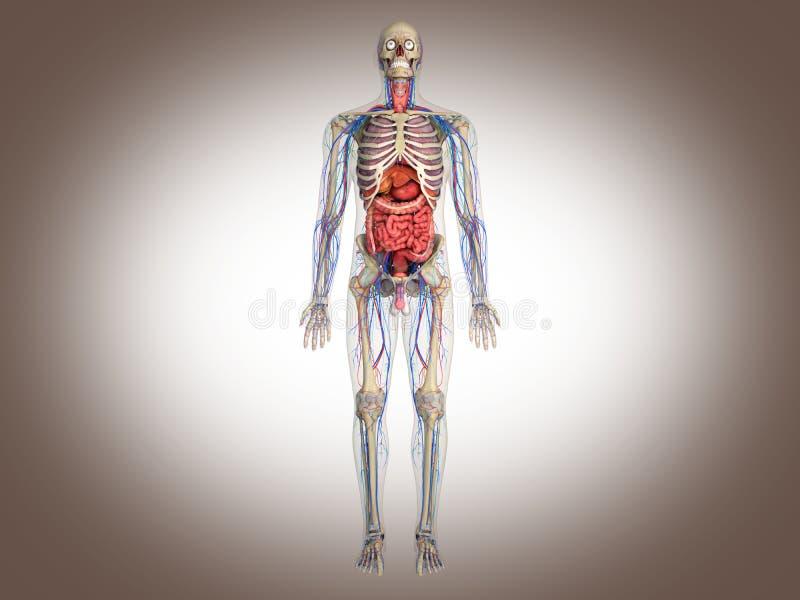 3D che rende organo interno intestinale royalty illustrazione gratis