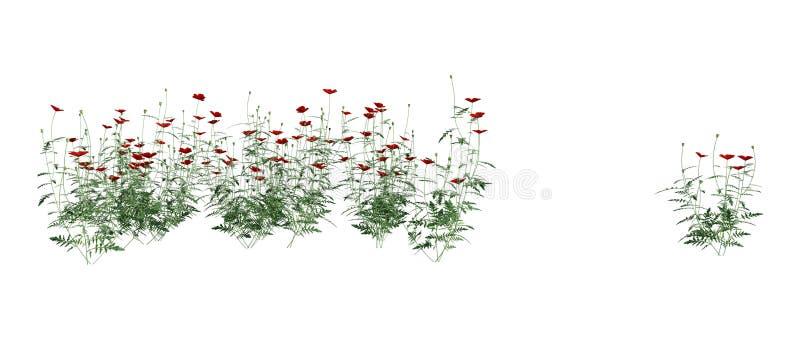 3D che rende Poppy Flowers rossa su bianco immagine stock libera da diritti