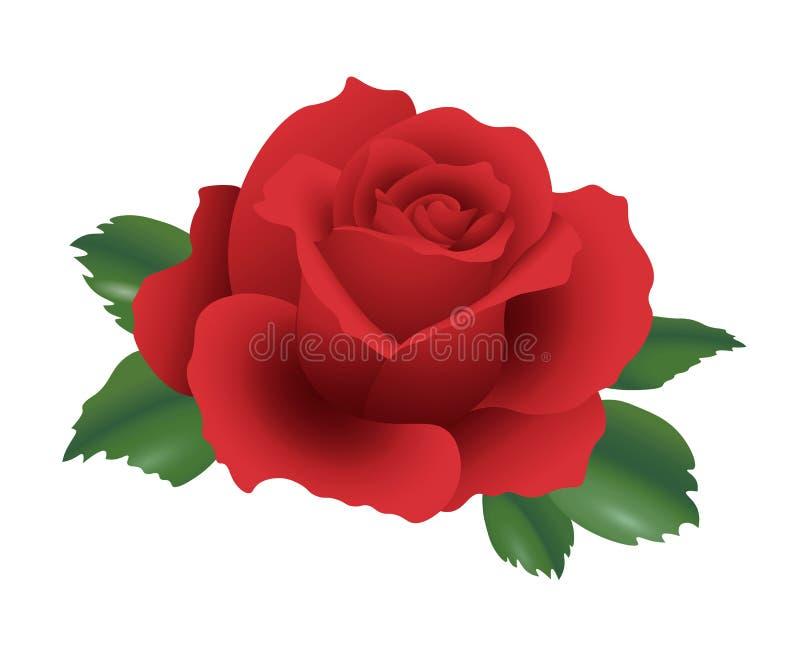 3d czerwieni realistycznej róży pojedynczy kwiat wyszczególniał wektorową ilustrację z zielonymi glansowanymi liśćmi royalty ilustracja