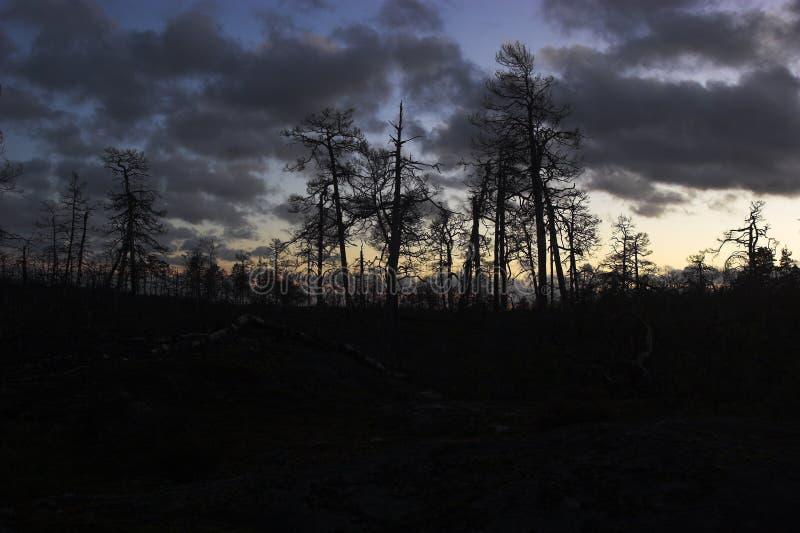 Döda träd arkivbild