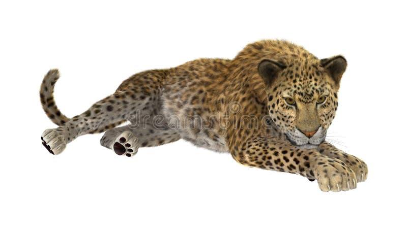 3D, das große Cat Leopard auf Weiß überträgt vektor abbildung