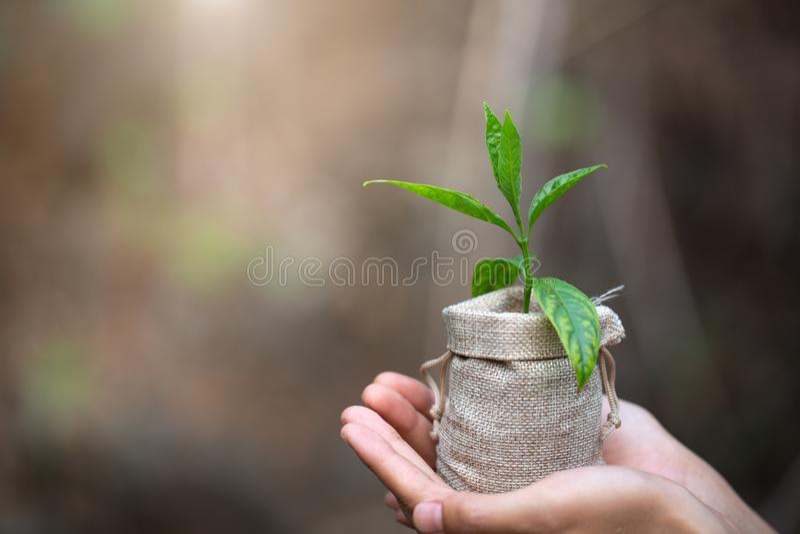 D?a de la Tierra del ambiente en las manos de los ?rboles que crecen alm?cigos Mano femenina que sostiene el ?rbol foto de archivo libre de regalías