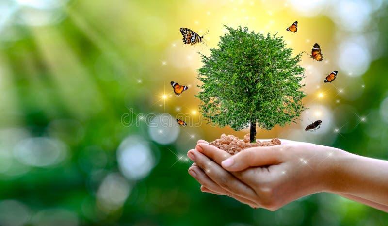 D?a de la Tierra del ambiente en las manos de los ?rboles que crecen alm?cigos ?rbol femenino de la tenencia de la mano del fondo fotos de archivo libres de regalías