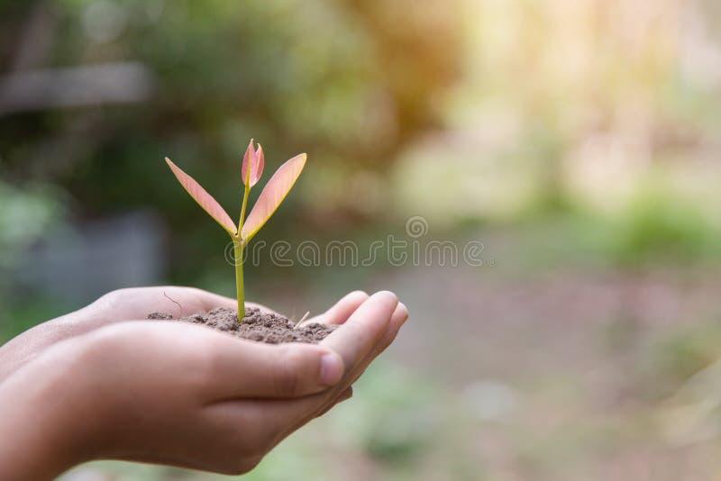 D?a de la Tierra del ambiente en las manos de los ?rboles que crecen alm?cigos ?rbol femenino de la tenencia de la mano del fondo fotografía de archivo libre de regalías