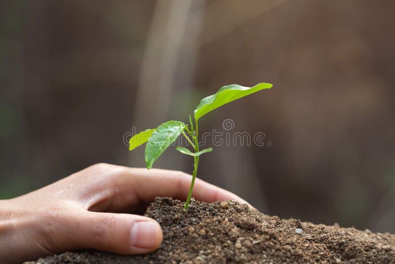D?a de la Tierra del ambiente en las manos de los ?rboles que crecen alm?cigos ?rbol femenino de la tenencia de la mano del fondo imagen de archivo