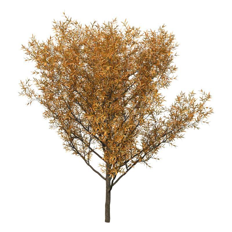3D die Crack Willow op Wit teruggeven royalty-vrije stock afbeelding