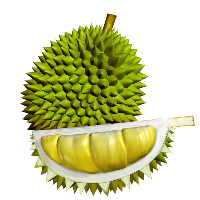 3D Durian owoc ilustracja wektor