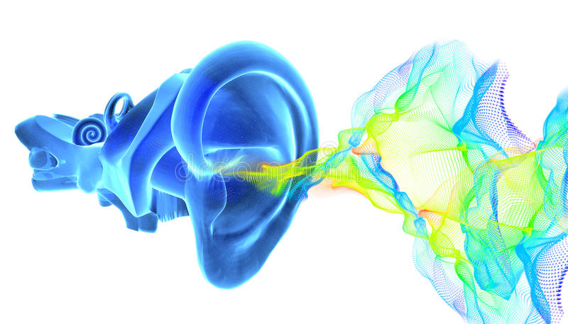 3D ear anatomy with sound waves vector illustration