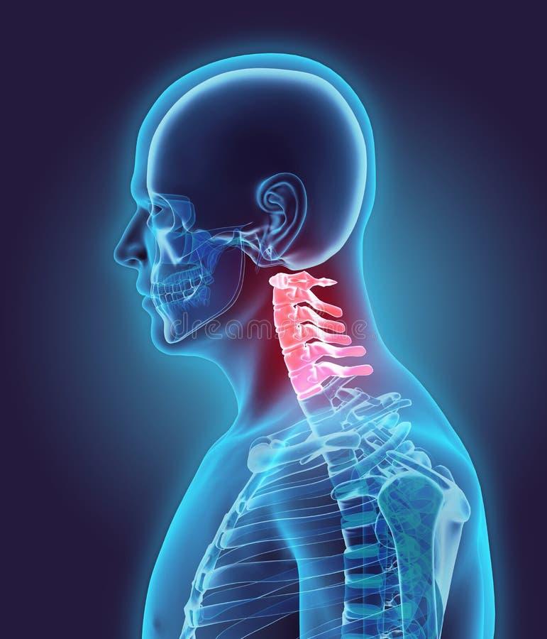 3D ejemplo de la espina dorsal cervical, concepto médico ilustración del vector