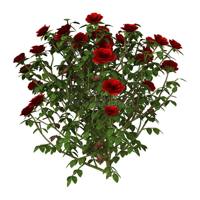 3D ejemplo Rose Bush roja en blanco stock de ilustración