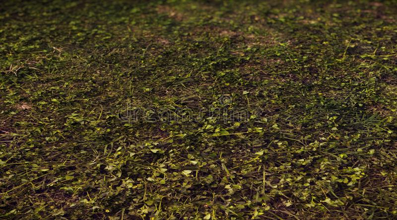 3d forest ground for backdrop stock photos