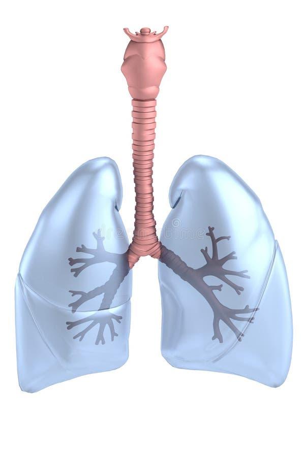 3d framför av lungor royaltyfri illustrationer