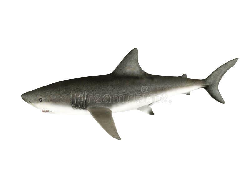 3D framför hajen arkivfoto