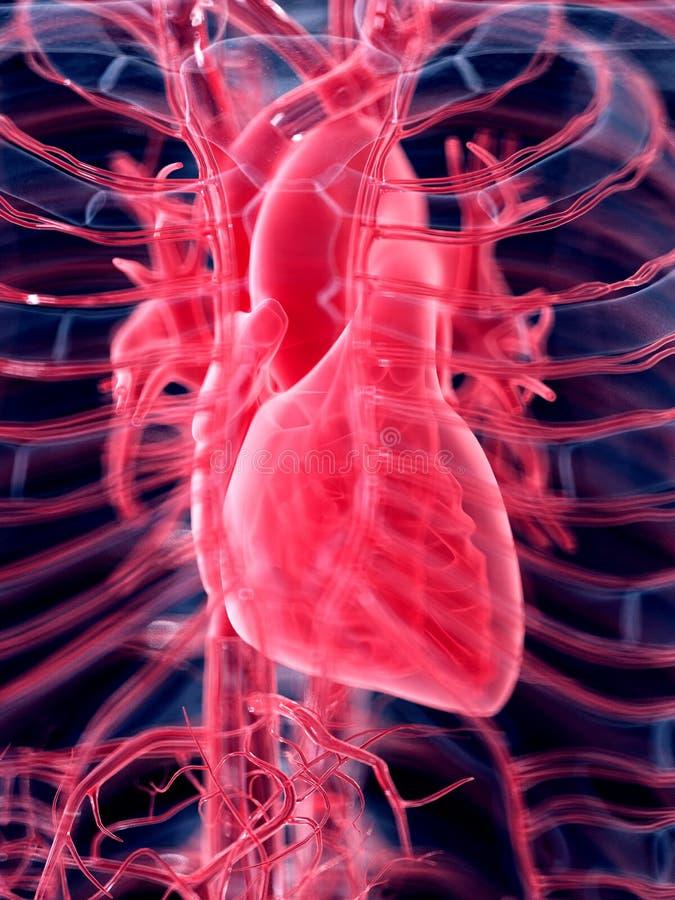 3D framförde den anatomical illustrationen stock illustrationer