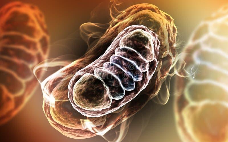 3d framförde den Digital illustrationen av Mitochondria i färgbakgrund vektor illustrationer