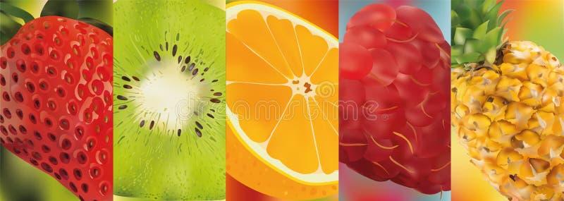 3d fruto real?stico, abacaxi, framboesa, quivi, morango, laranja Gr?ficos de vetor Um jogo da fruta ilustração stock