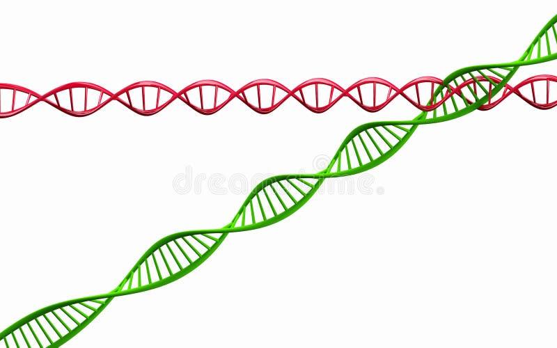 3d geef terug, geïsoleerd Model van verdraaide DNA-ketting. royalty-vrije illustratie