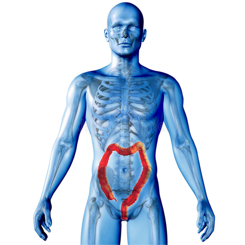 3D geef van een medisch beeld van een mannelijk cijfer met dubbelpunt terug highlig stock illustratie