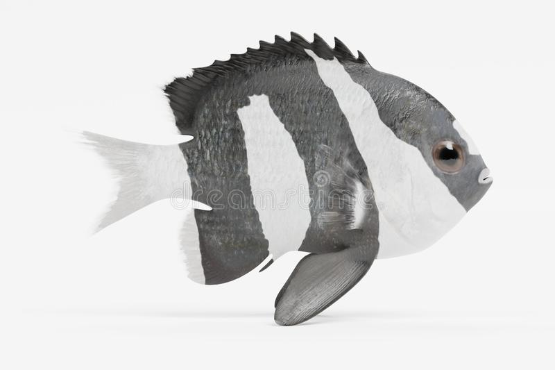 3d geef van Humbug-Juffer terug vector illustratie