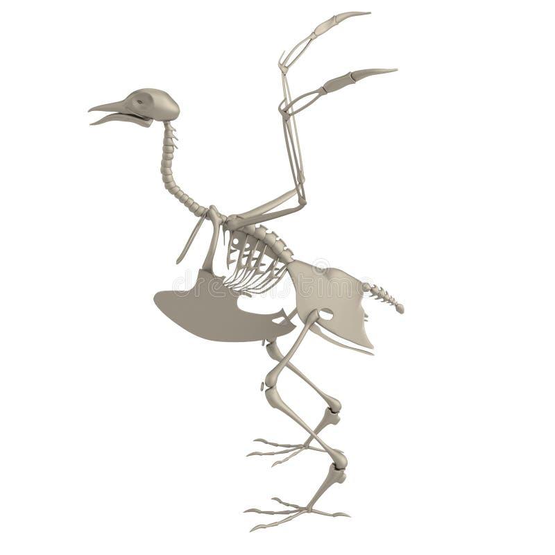 3d geef van vogelskelet terug stock illustratie