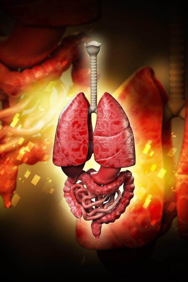 3d ha reso gli organi umani sul fondo di colore royalty illustrazione gratis