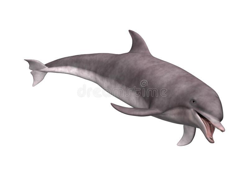 3D het Teruggeven Dolfijn op Wit stock illustratie