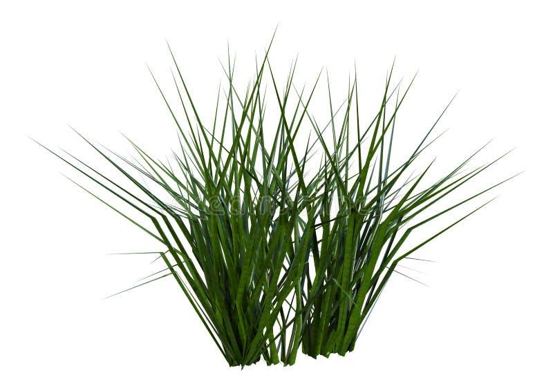 3D het Teruggeven Flard van Gras op Wit stock afbeeldingen