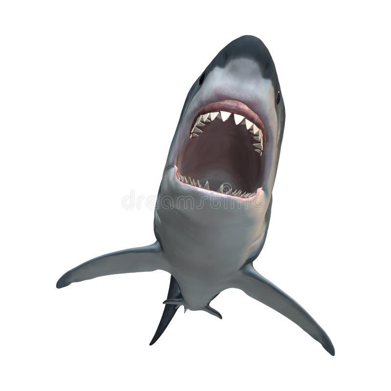 3D het Teruggeven Grote Witte Haai op Wit royalty-vrije stock afbeelding